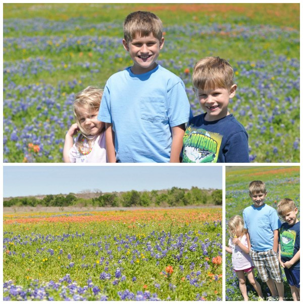 bluebonnet collage