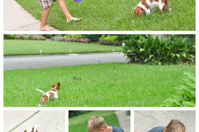 You CAN Teach a New Dog Old Tricks!